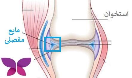 مایع مفصلی هیالورونیک اسید دارد